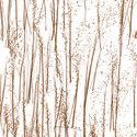 rice_grass