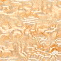 migration_saffron
